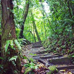 Saves Rainforests